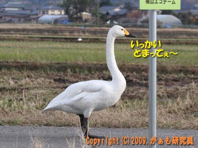 Hyouko091122b__0020_4241a