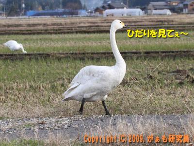 Hyouko091122b__0021_4240a