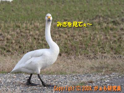 Hyouko091122b__0022_4238a