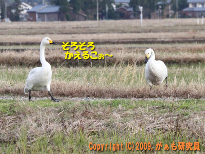 Hyouko091122b__0028_4184a